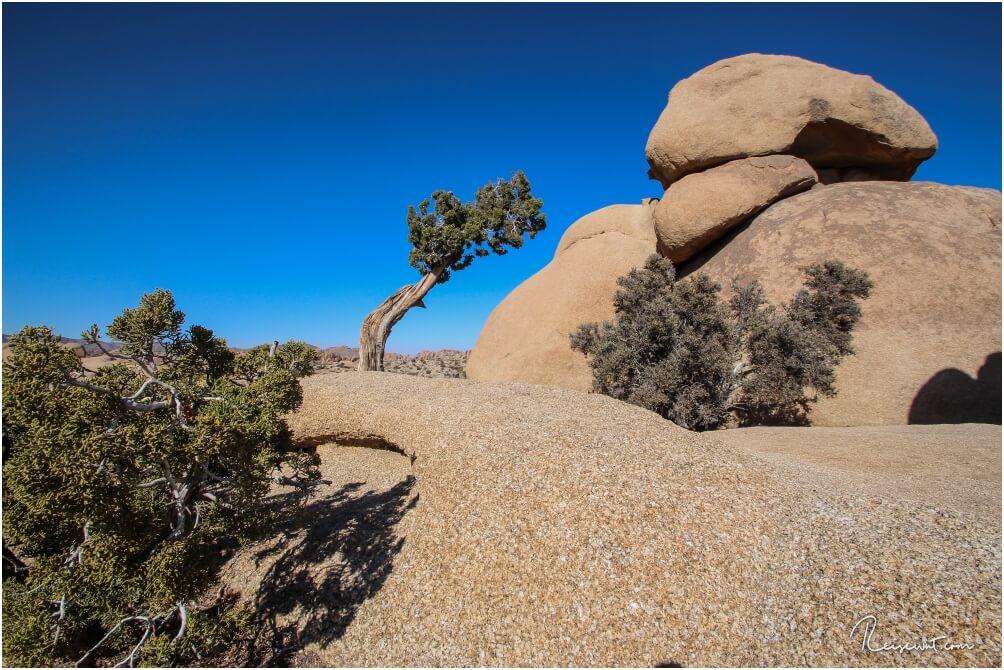Der Leaning Tree sind aus jeder Perspektive völlig anders aus