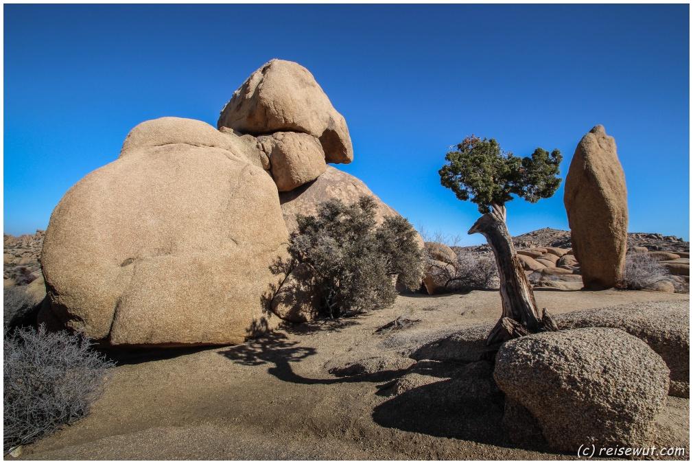 Jumbo Rocks Area