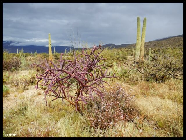 Saguaro Loop