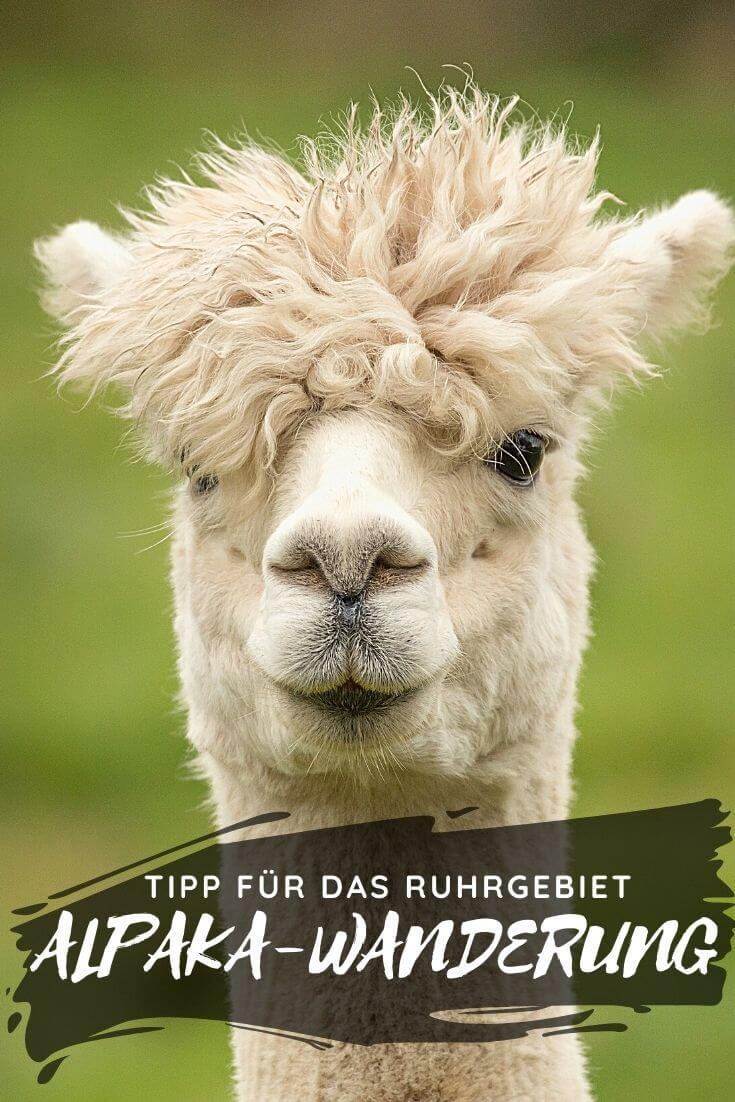 Alpaka-Wanderung im Ruhrgebiet | Pintrest Pin