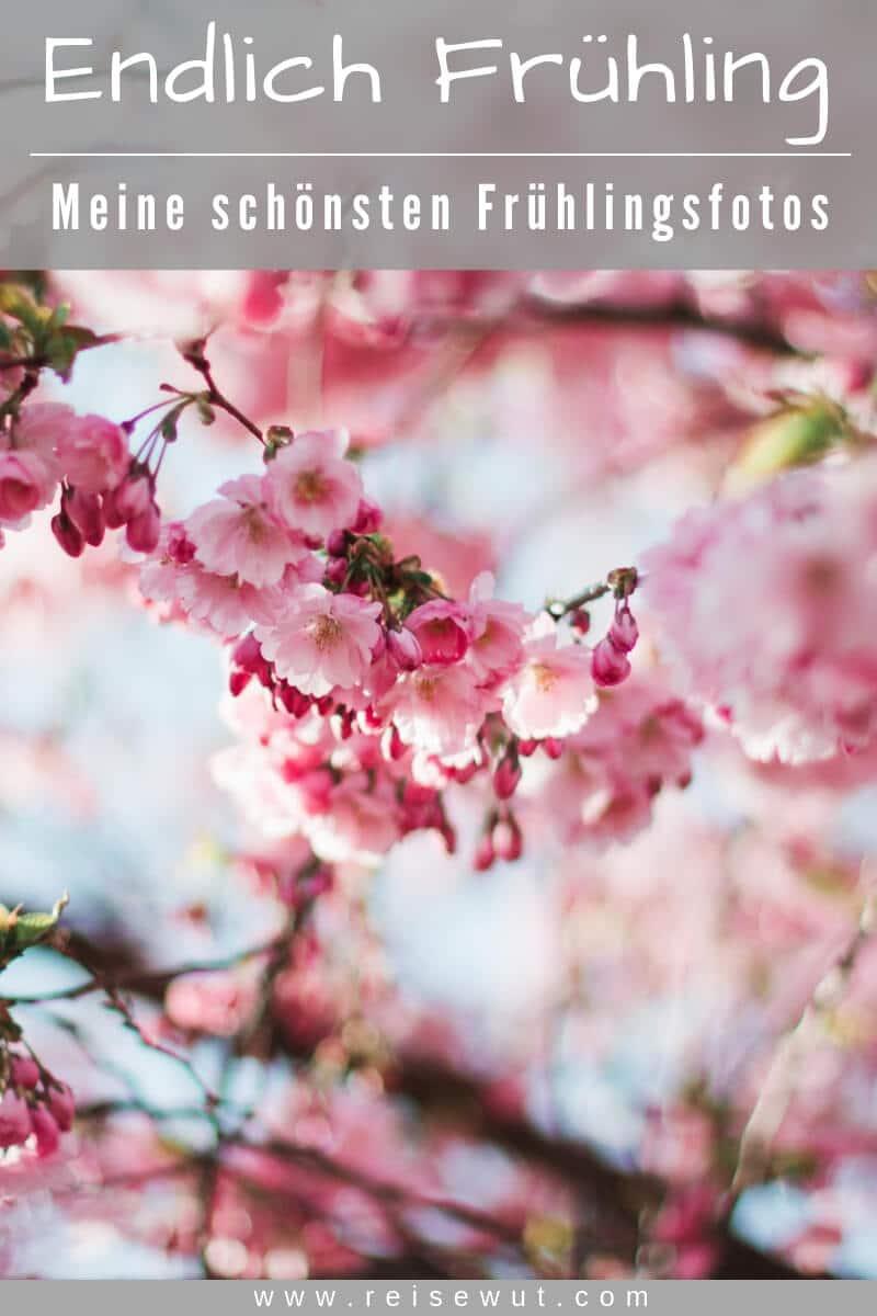 Pinterest Pin | Endlich Frühling - Frühlingsbilder