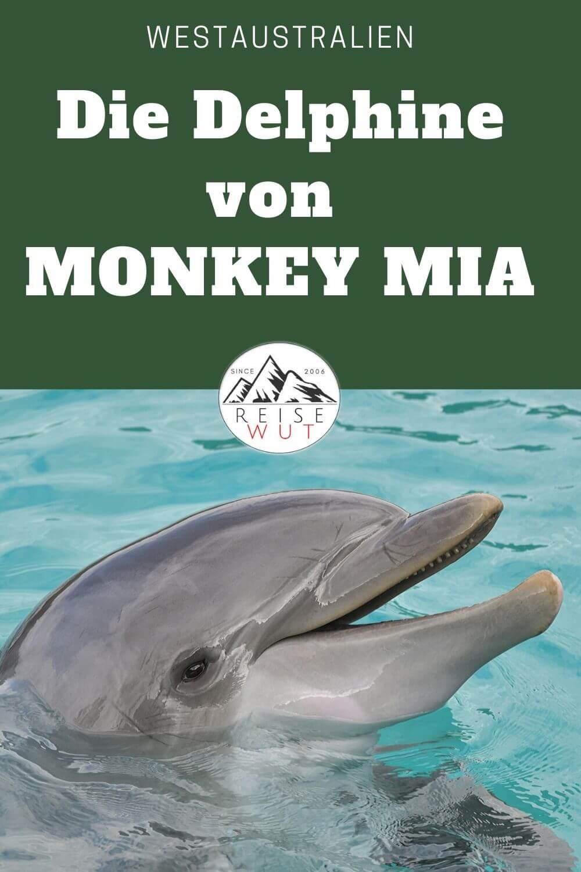 Monkey Mia - Pinterest Pin