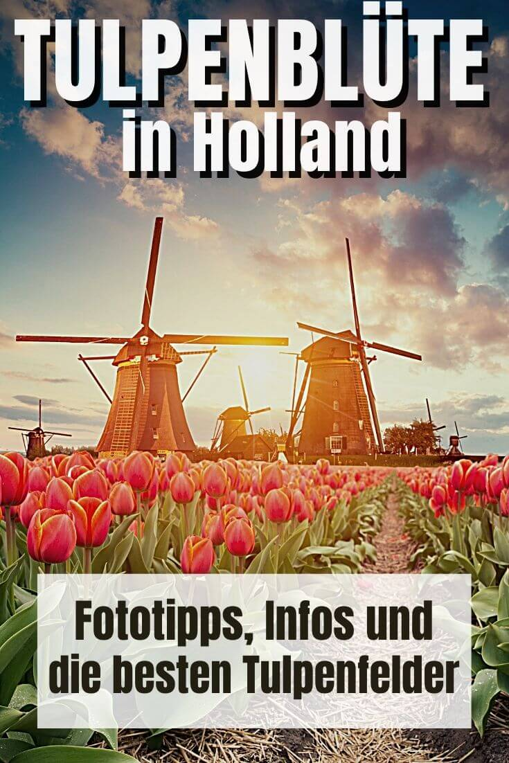 Pinterest Pin | Tulpenblüte in Holland