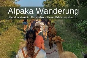 Alpaka-Wanderung