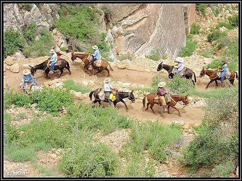 Muli-Treck auf dem Bright Angel Trail