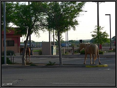 Pferde auf dem Supermarktparkplatz