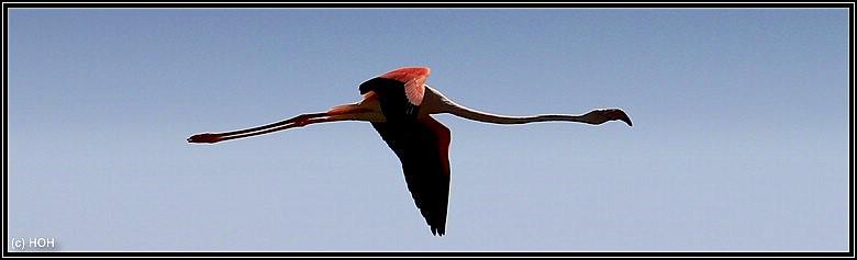 Ein fliegender Flamingo