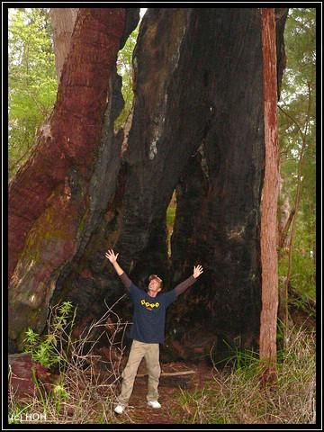 ... und vor einem Baum im Ancient Empire