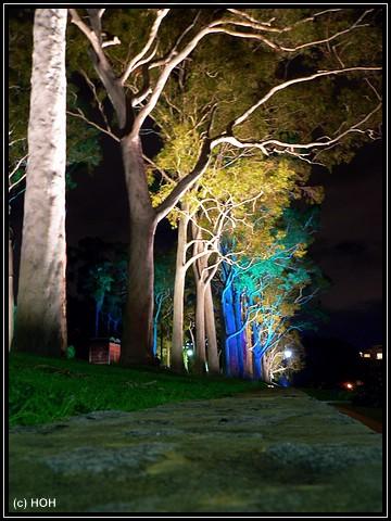 Avenue of trees im Kings Park