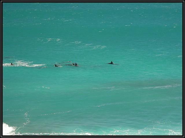 Wilde Delphine im Meer