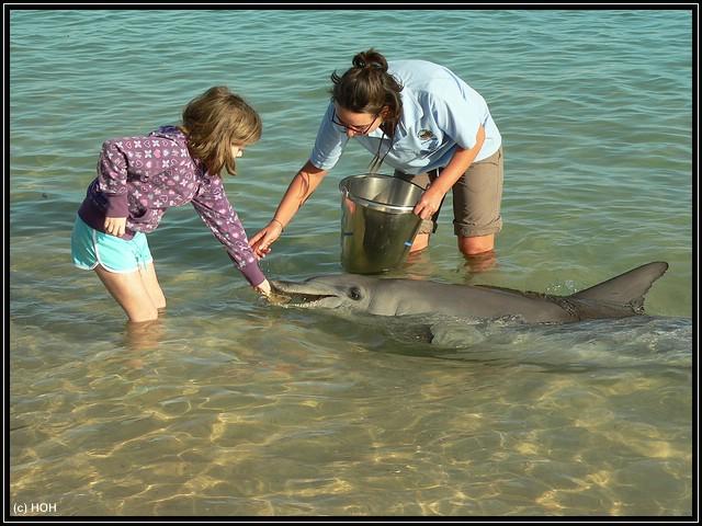 Delphinfütterung