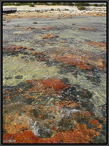Red Cap Stromatolithen