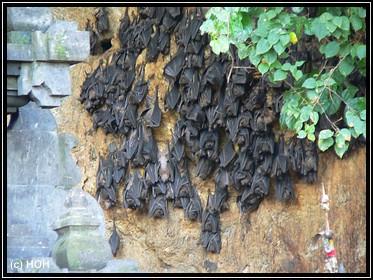 Fledermäuschens
