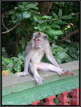 Der Al Bundy unter den Affen