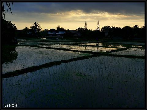 Abendstimmung über den Reisfeldern