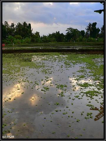 Impression bei Ubud