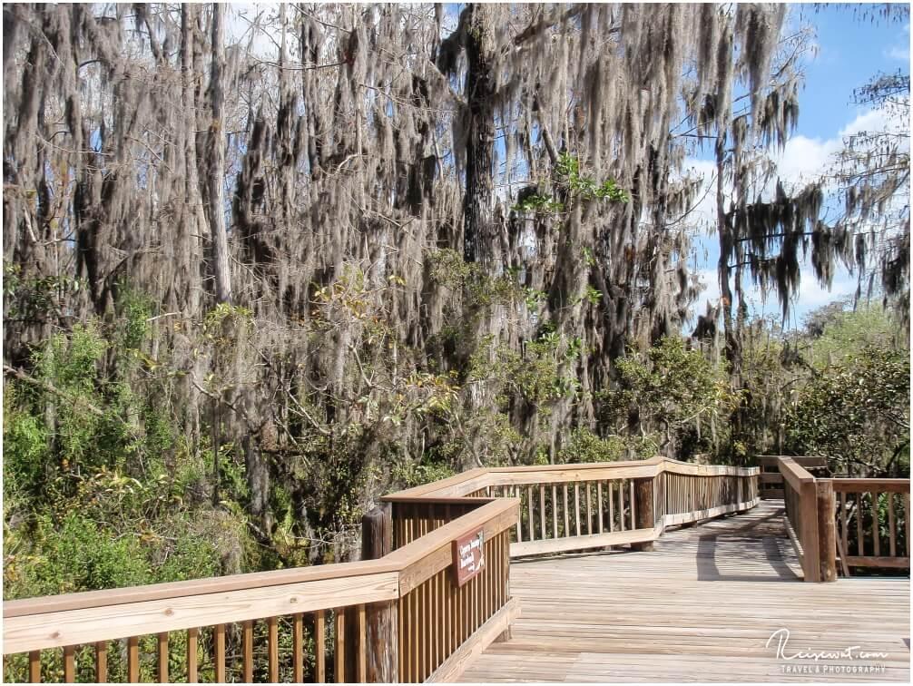 Nur einer von unzähligen hölzernen Boardwalks durch Mangrovenwälder an der Golfküste
