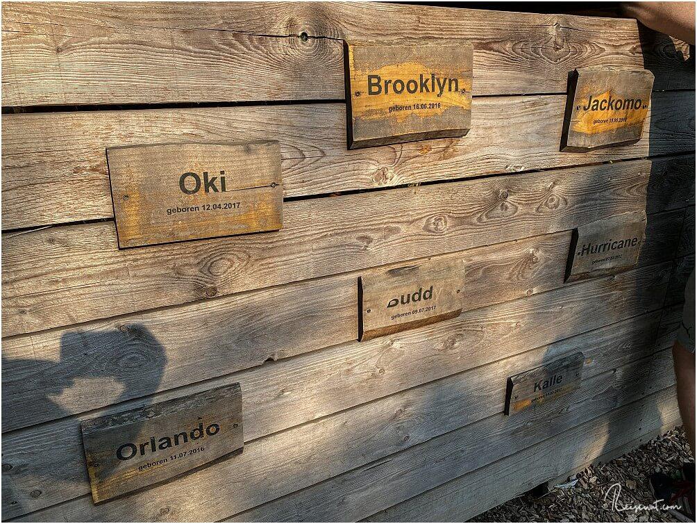 Das sind nur einige der Alpaka-Namen, die man auf Daniel's kleiner Farm findet