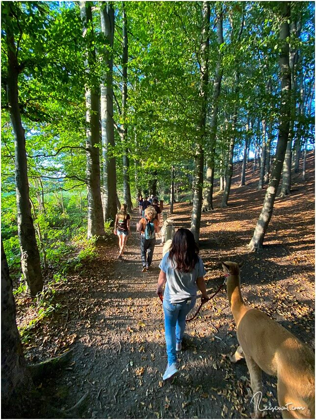 Auch durch den Wald geht es unterwegs ...