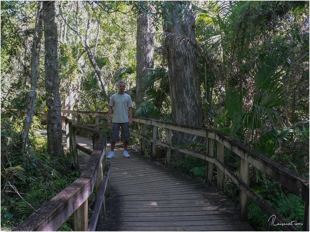 Boardwalk in der Fakahatchee Strand Preserve