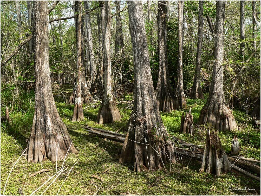 Mangroven im Kirby Storter Roadside Park