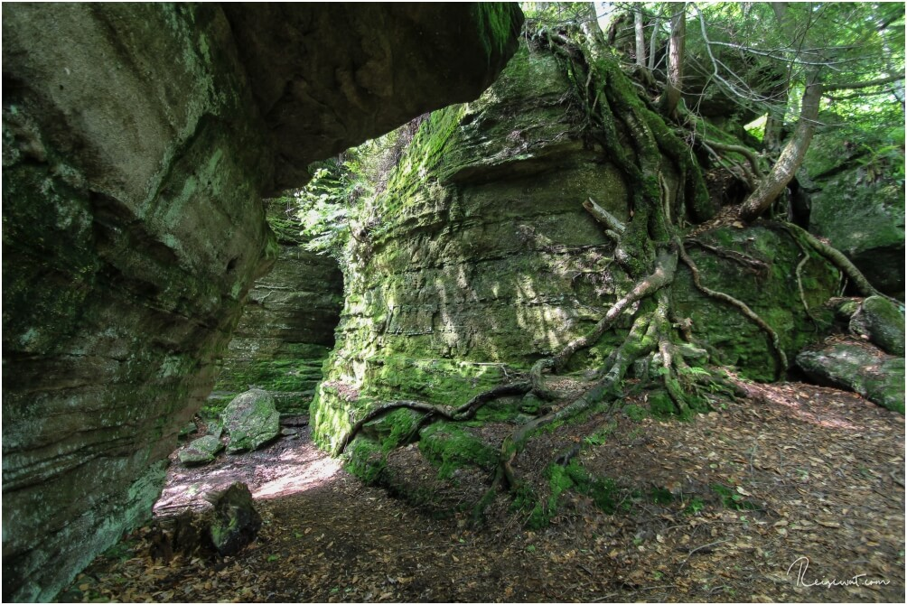 Riesige Wurzeln überwuchern die Felsen im Panama Rocks Scenic Park