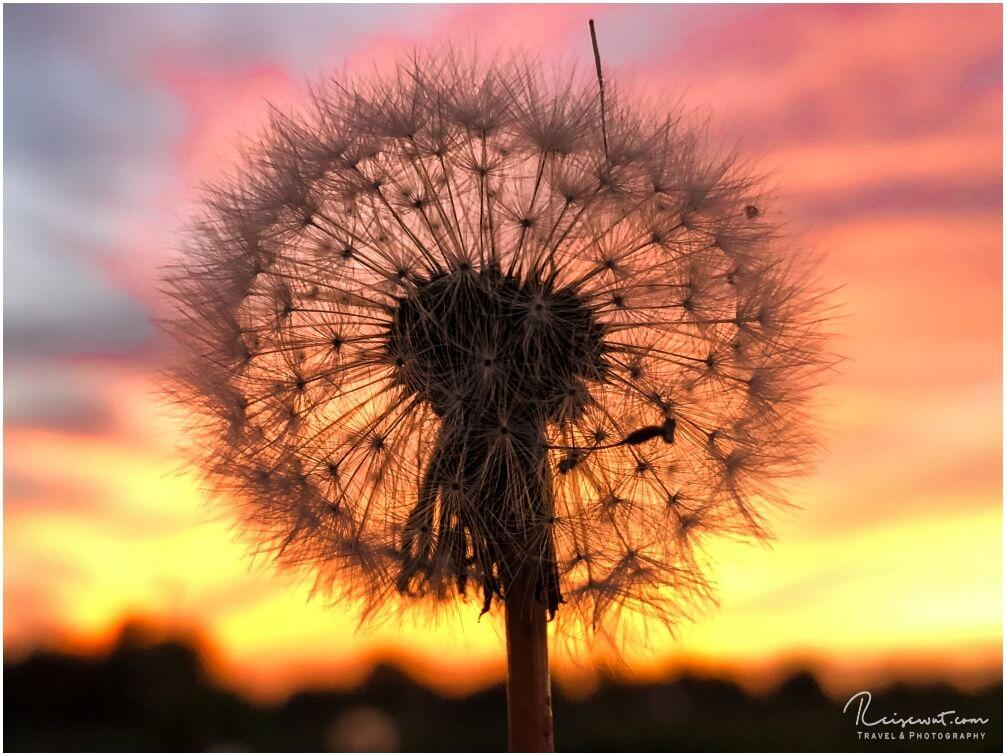 Die wahre Schönheit liegt oftmals im Detail der Dinge, wie hier bei dieser kleinen Pusteblume
