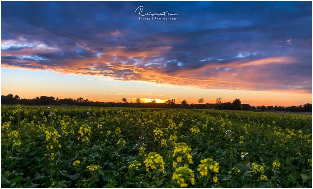 Ackersenf meets Sonnenuntergang, eine farblich recht gute Kombination