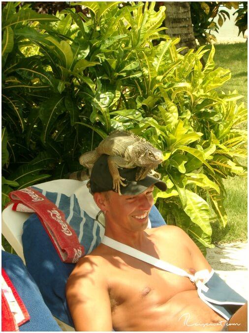 Lebende Kopfbedeckung