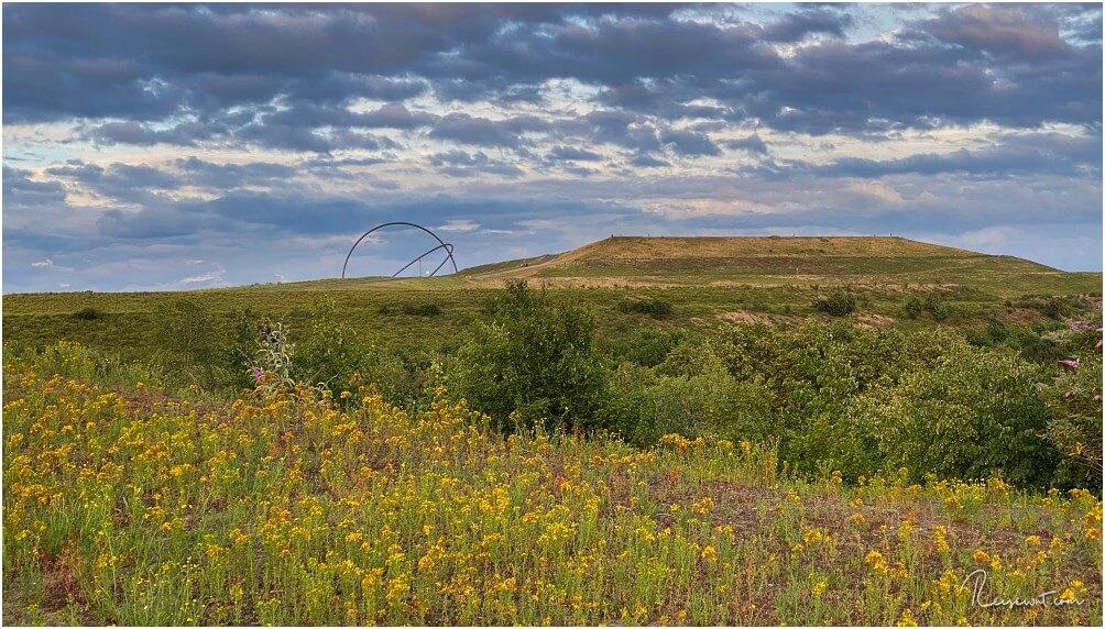 Im Frühjahr und Sommer erblüht die Halde und es bieten sich tolle Fotomotive an