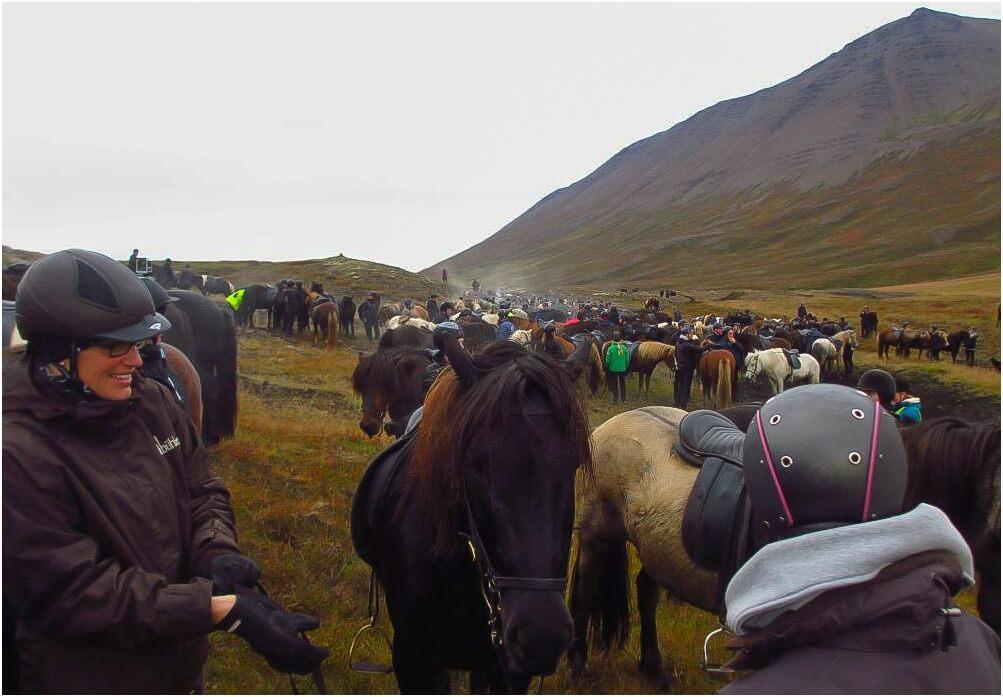 Was für ein unglaubliches Gewusel beim Pferdeabtrieb