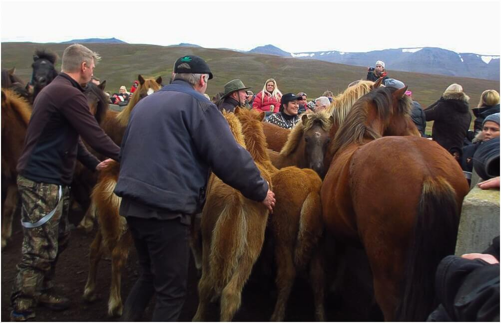 Es wird aussortiert und zugeordnet, welches Pferd gehört eigentlich wo genau hin?