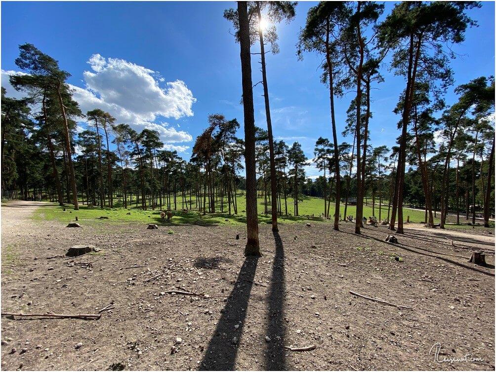 Hier befindet man sich quasi am Anfang des Rundweges im Naturwildpark Granat