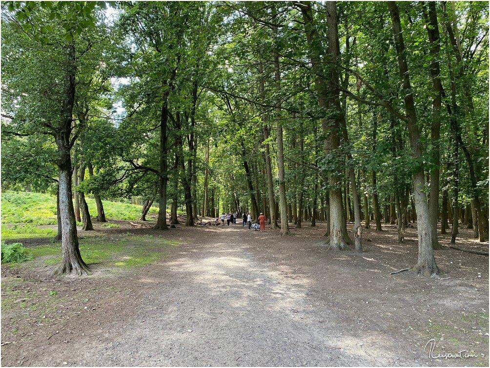 Ungefähr auf der Hälfte des Rundgangs führt der Weg durch ein Waldstück