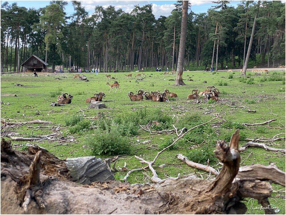 Gemütliche Runde im Wildpark Granat