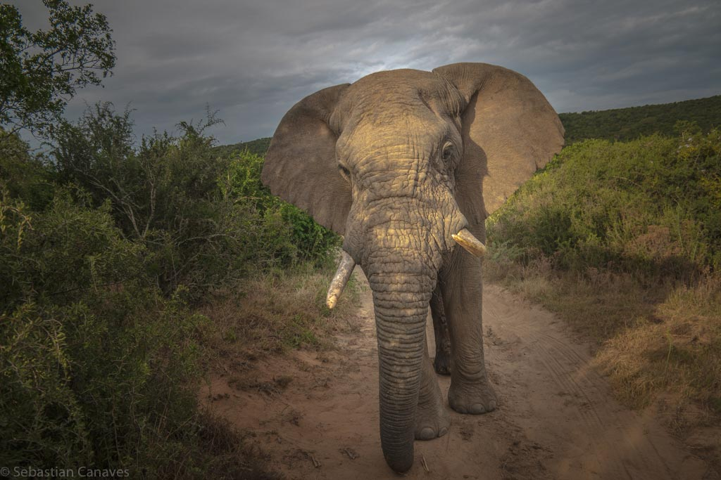 Unterwegs auf Safari ...
