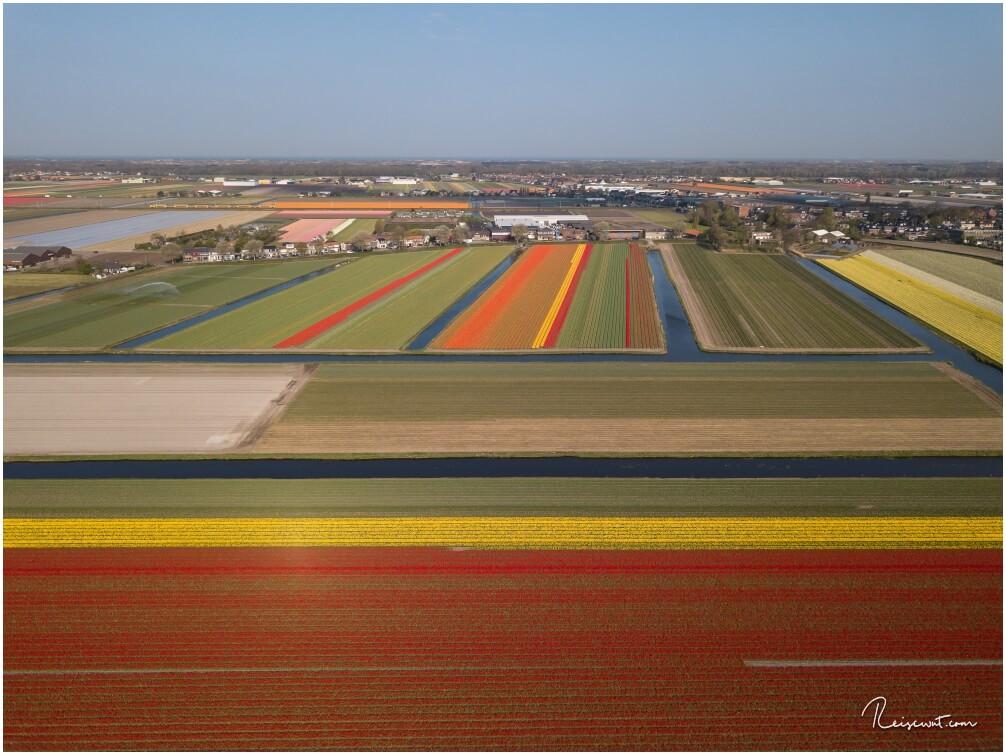 Tulpenfelder in der Nähe vom Keukenhof aus der Luft