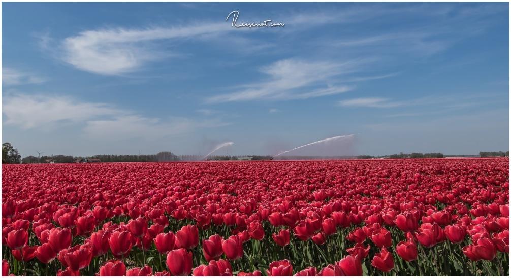 Ohne Bewässerung wäre viele Felder durch den warmen Frühling mit Sicherheit bereits vertrocknet