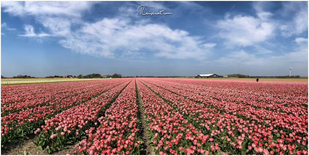 Im Hintergrund rechts der Blumnehof Fluwel, die Felder hier sind riesig groß