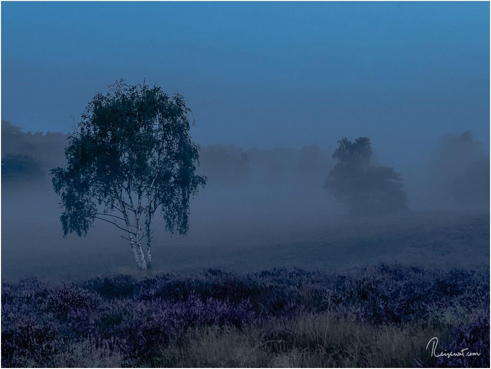 Mystische Stimmung vor Sonnenaufgang in der Westruper Heide