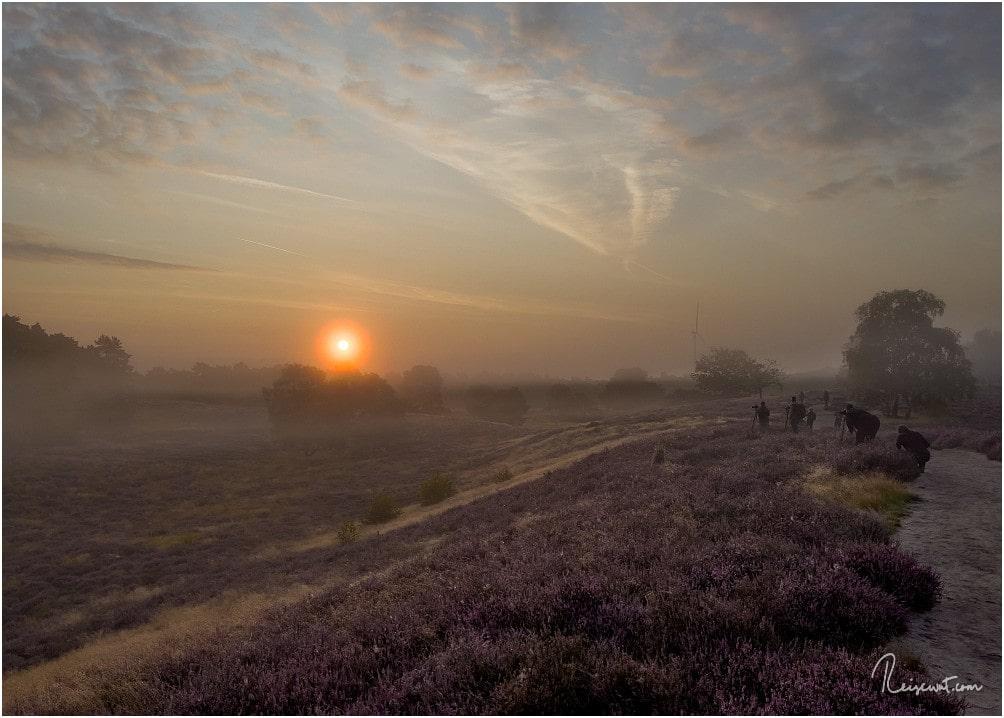 Heideblüte UND Frühnebel zieht naturgemäß immer jede Menge Fotografen an zum Sonnenaufgang