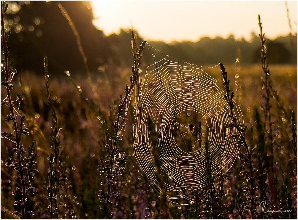 Tolles Licht und ein Spinnenetz am frühen Morgen
