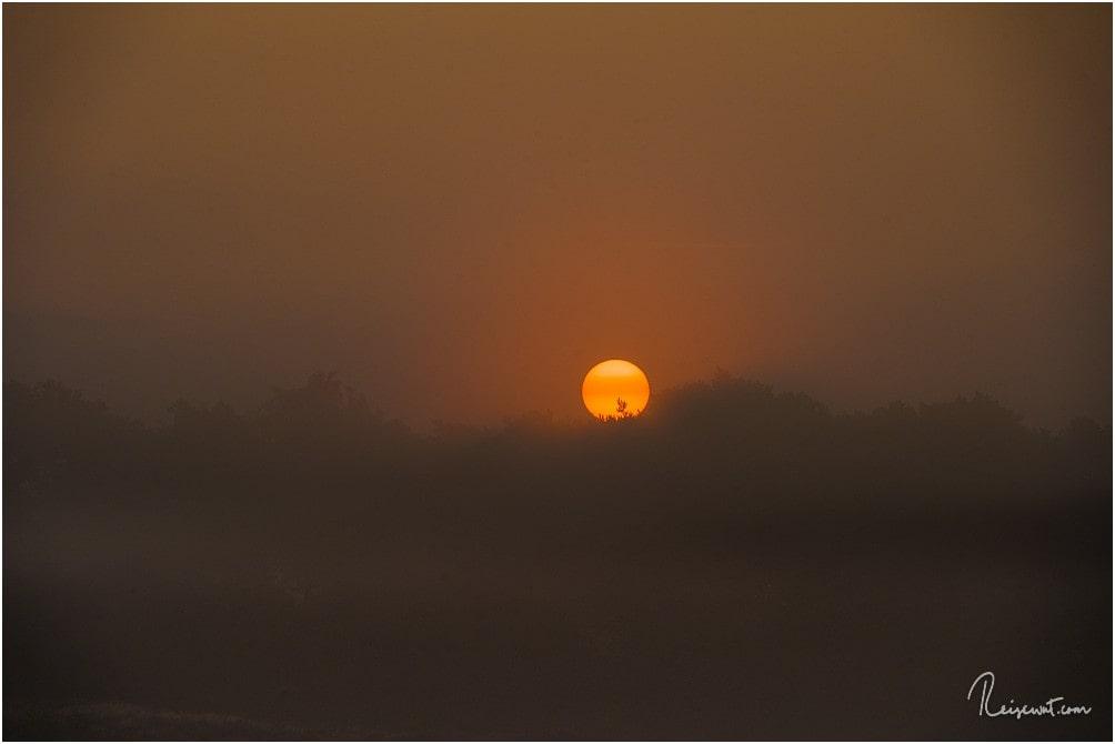 Der Tag erwacht in der Westruper Heide