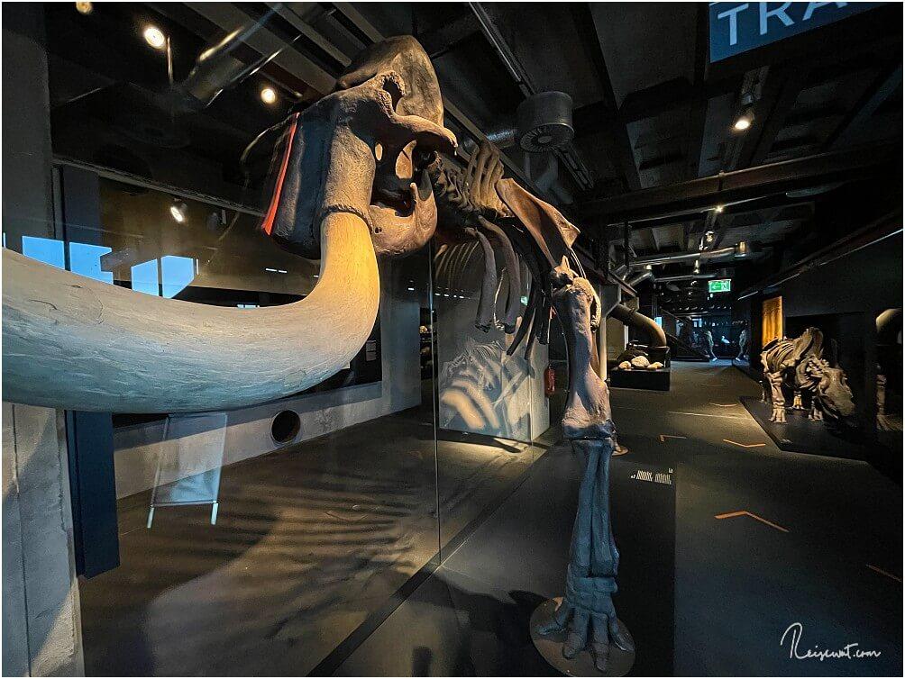 Auf Ebene 2 (11.80-Meter-Ebene) bekommt man es unter anderem mit diesem Skelett eines Mammuts zu tun