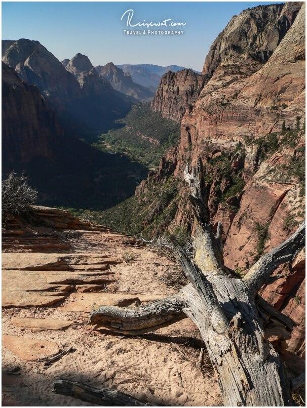 Tote Baumstämme sind immer ein super Fotomotiv