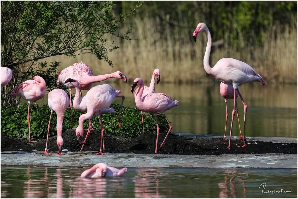 Flamingos sind jedes Mal ein dankbares Fotomotiv