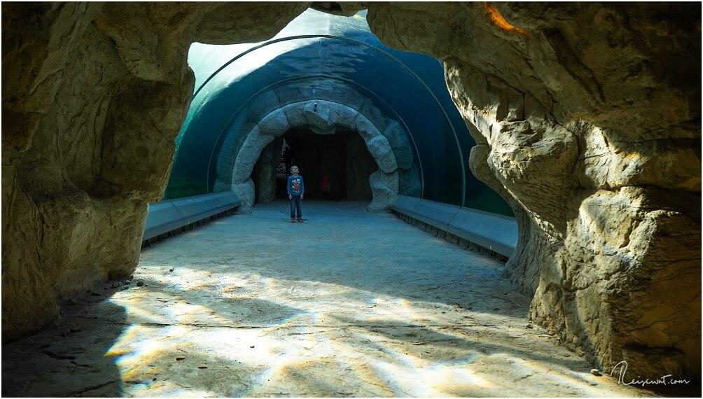Den Glastunnel bei den Seelöwen in der ZOOM Erlebniswelt Gelsenkirchen sieht man selten so leer wie hier auf dem Foto