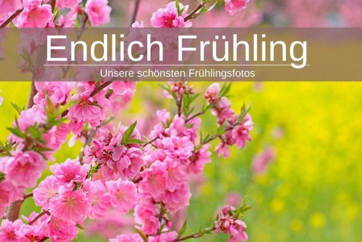 Frühling Fotos