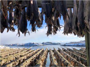 Stockfischfarm bei Henningsvaer
