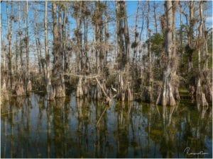 Loop Road Florida Wasserloch